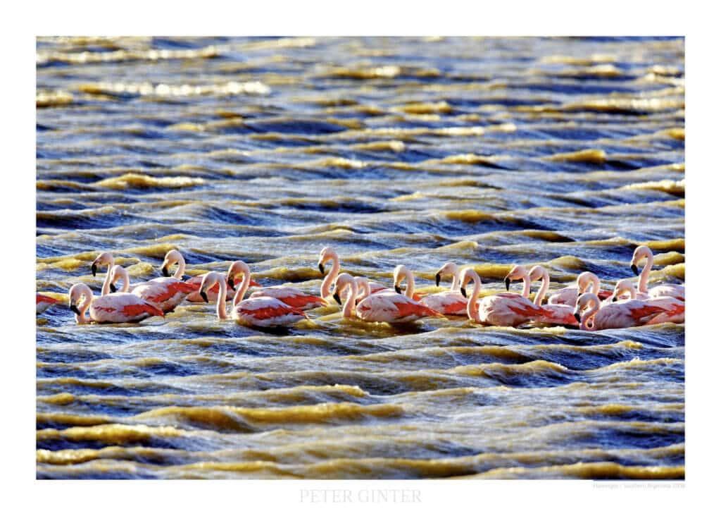 Flamingos / Southern Argentina 2008 © Peter Ginter